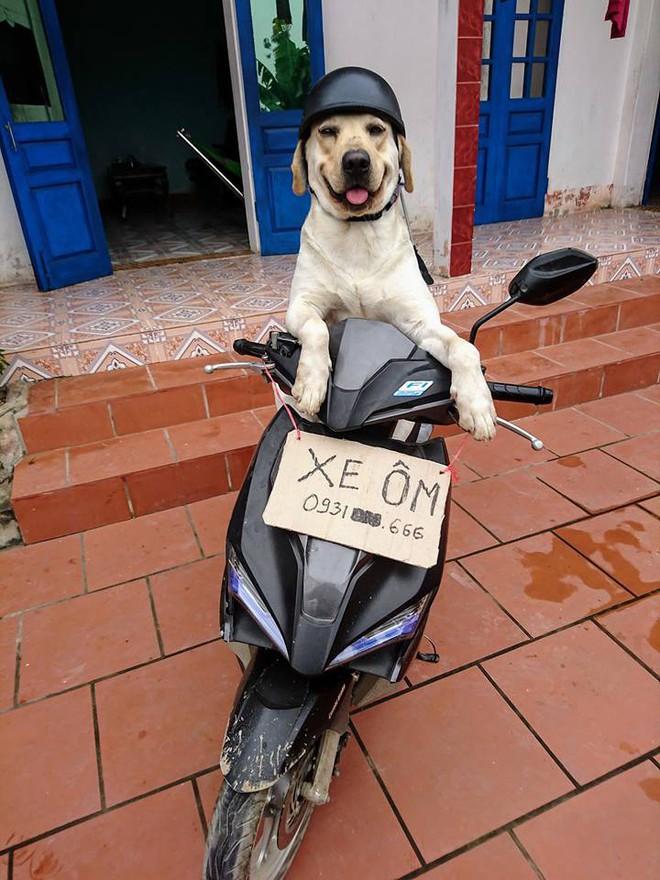 Trịnh Văn Củ Cải: Chú chó siêu thông minh, có thể làm toán và phân biệt logo đội bóng - ảnh 3