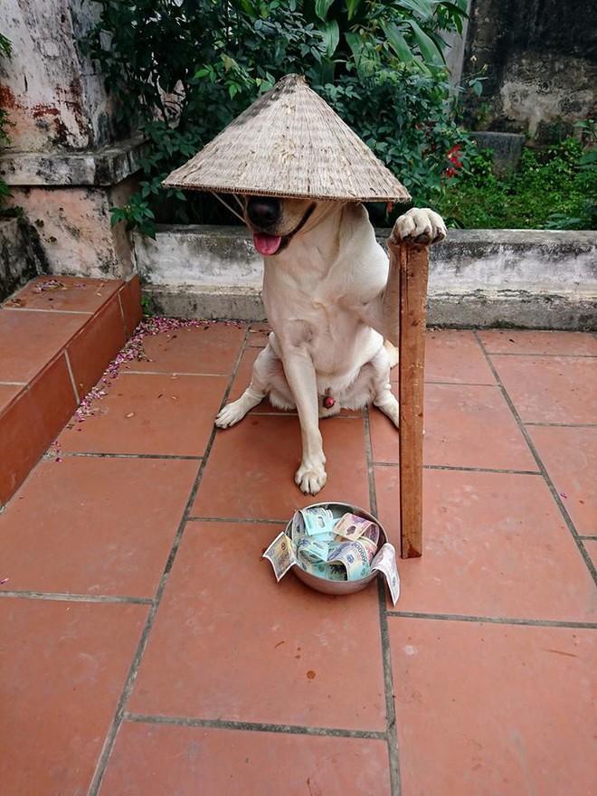Trịnh Văn Củ Cải: Chú chó siêu thông minh, có thể làm toán và phân biệt logo đội bóng - ảnh 2