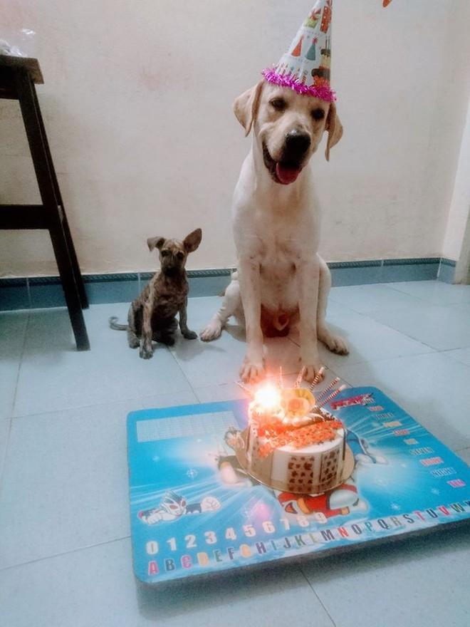 Trịnh Văn Củ Cải: Chú chó siêu thông minh, có thể làm toán và phân biệt logo đội bóng - ảnh 4