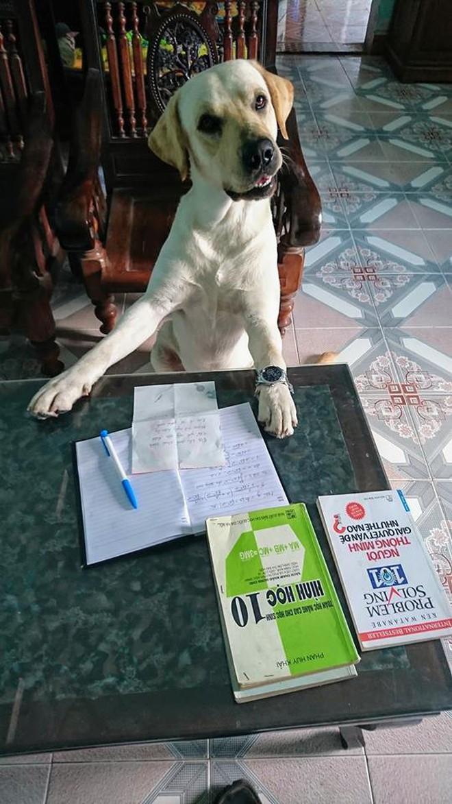 Trịnh Văn Củ Cải: Chú chó siêu thông minh, có thể làm toán và phân biệt logo đội bóng - ảnh 1