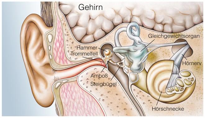 Chứng ù tai: căn bệnh phổ biến đối với giới trẻ và biện pháp phòng ngừa - ảnh 1