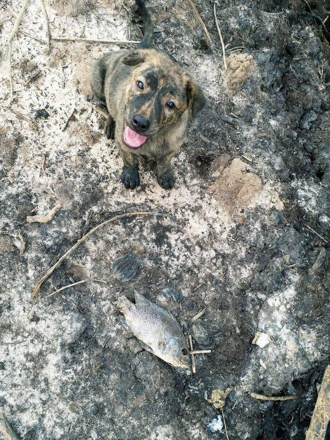 Chuyện boss ngoan: Chú chó nhỏ giữa trưa nắng lặn lội đi kiếm bữa trưa về vì sợ chủ đói - Ảnh 1.
