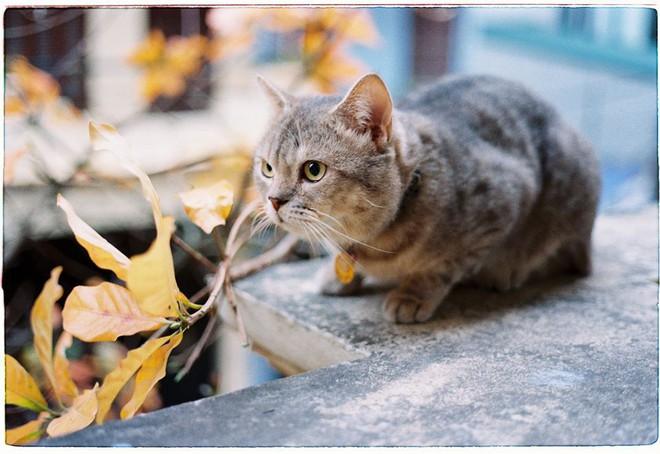Chú mèo tên Bư nổi tiếng trên MXH bất ngờ qua đời khiến cư dân mạng tiếc nuối - ảnh 11