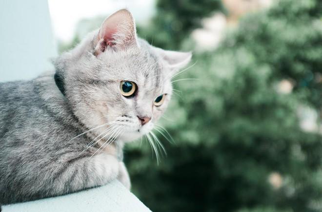 Chú mèo tên Bư nổi tiếng trên MXH bất ngờ qua đời khiến cư dân mạng tiếc nuối - ảnh 10