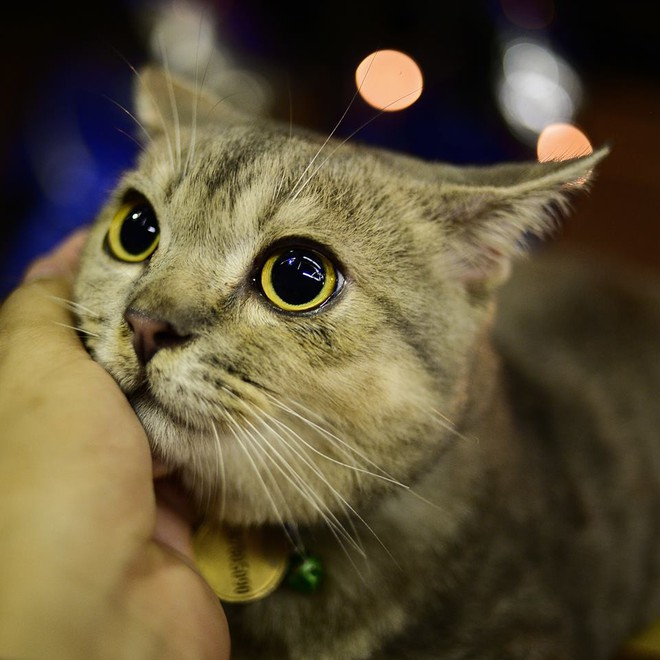 Chú mèo tên Bư nổi tiếng trên MXH bất ngờ qua đời khiến cư dân mạng tiếc nuối - ảnh 9