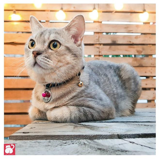 Chú mèo tên Bư nổi tiếng trên MXH bất ngờ qua đời khiến cư dân mạng tiếc nuối - ảnh 6
