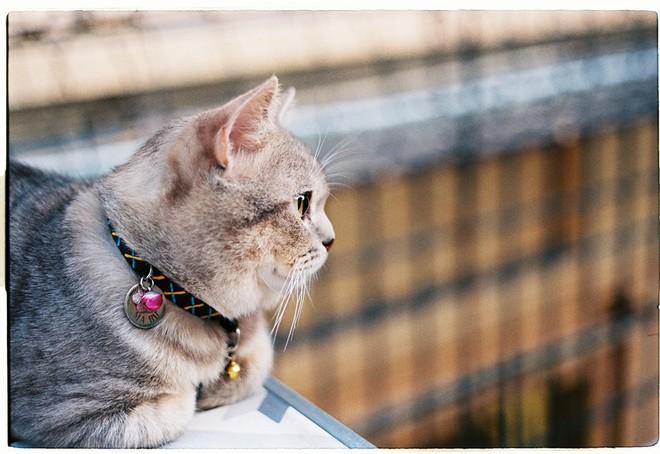 Chú mèo tên Bư nổi tiếng trên MXH bất ngờ qua đời khiến cư dân mạng tiếc nuối - ảnh 5