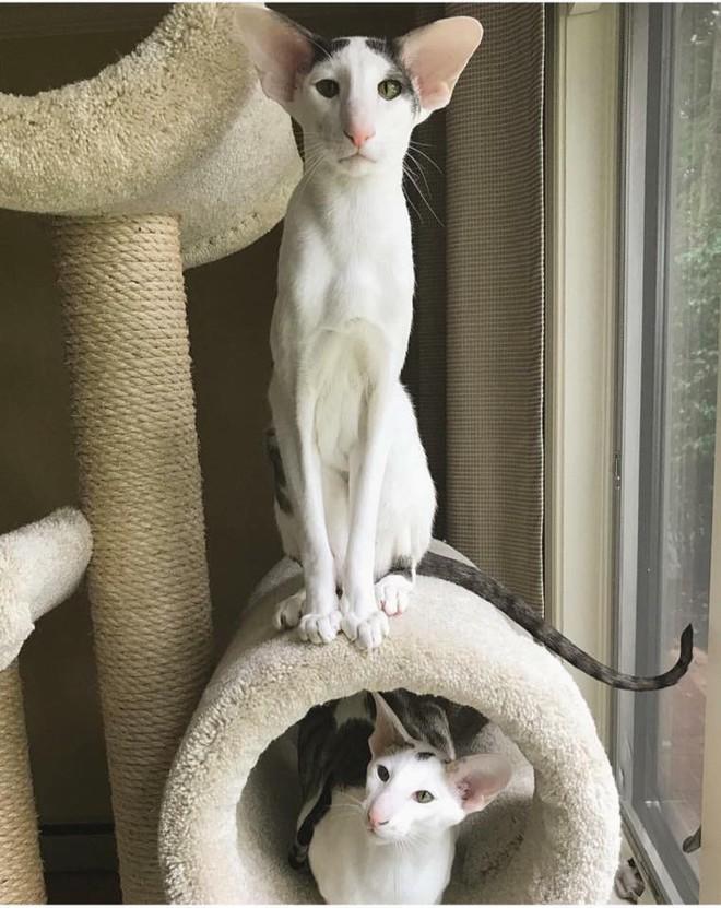 Bộ ảnh gia đình mèo xấu lạ mỗi con một kiểu nhưng đứng cùng nhau lại chất thôi rồi - Ảnh 1.