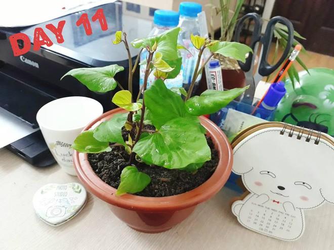 Hành trình trở thành hoa khôi văn phòng bất đắc dĩ của một củ khoai lang - Ảnh 6.
