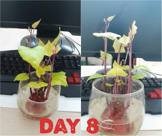 Hành trình trở thành hoa khôi văn phòng bất đắc dĩ của một củ khoai lang - Ảnh 4.