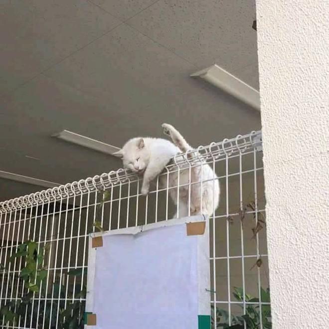 Chùm ảnh: Những pha ngủ ngày bá đạo của các quàng thượng mèo trên khắp cả nước - Ảnh 2.