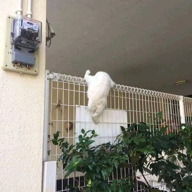 Chùm ảnh: Những pha ngủ ngày bá đạo của các quàng thượng mèo trên khắp cả nước - Ảnh 9.