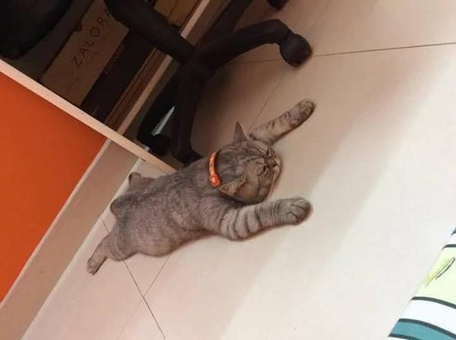 Chùm ảnh: Những pha ngủ ngày bá đạo của các quàng thượng mèo trên khắp cả nước - Ảnh 11.