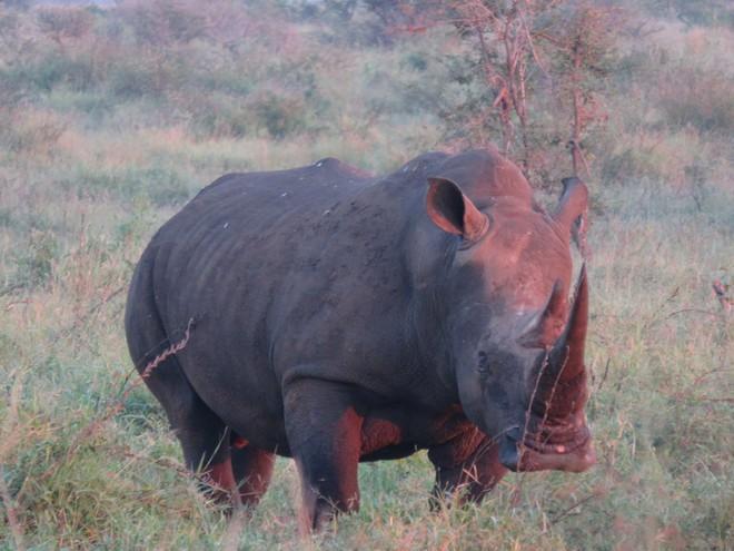 Cô gái tê giác Nguyễn Thị Thu Trang: Bảo tồn động vật hoang dã cũng chính là trực tiếp bảo vệ đồng loại của mình - ảnh 6