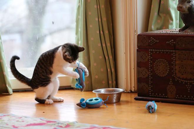 Loạt đồ chăm sóc chiều lòng các boss chó mèo đang khó ở - Ảnh 4.