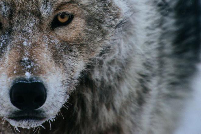 Đằng sau chú sói Zabivaka là cả một bầu trời thần thoại mà ai trót yêu nước Nga đều biết đến - ảnh 10