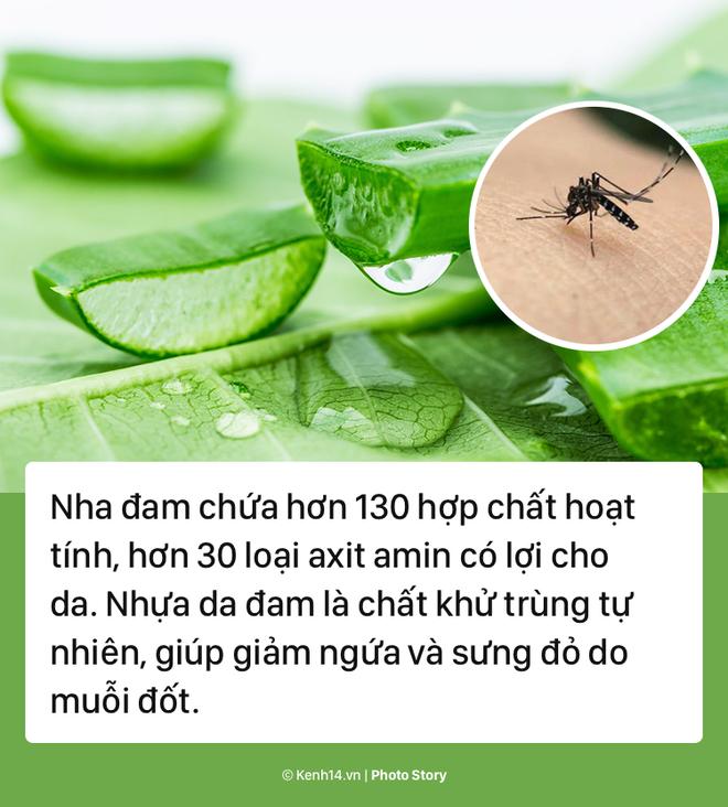 Giải quyết ngay vết muỗi đốt với các sản phẩm tự nhiên này - Ảnh 3.