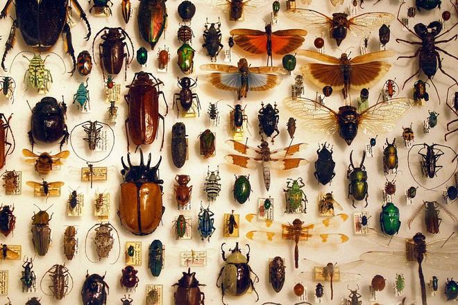 """Hơn 1 triệu loài côn trùng trên Trái đất nhưng đây là lý do mà đa phần chúng """"sợ"""" sống dưới biển hơn bao giờ hết - ảnh 1"""