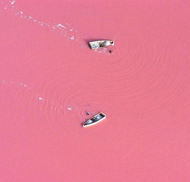 Hồ màu hồng lạ lùng giữa vùng đảo nước Úc: Điều gì tạo nên màu sắc thú vị này? - ảnh 3
