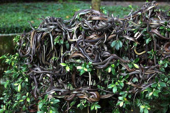 Hòn đảo nguy hiểm bậc nhất thế giới, cấm con người đặt chân lên tại Brazil: 1 mét vuông 5 con rắn - ảnh 2
