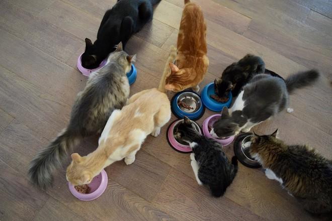 Công việc trong mơ cho hội cuồng mèo: Sống trên đảo thiên đường và chơi với 55 con boss mỗi ngày - ảnh 5
