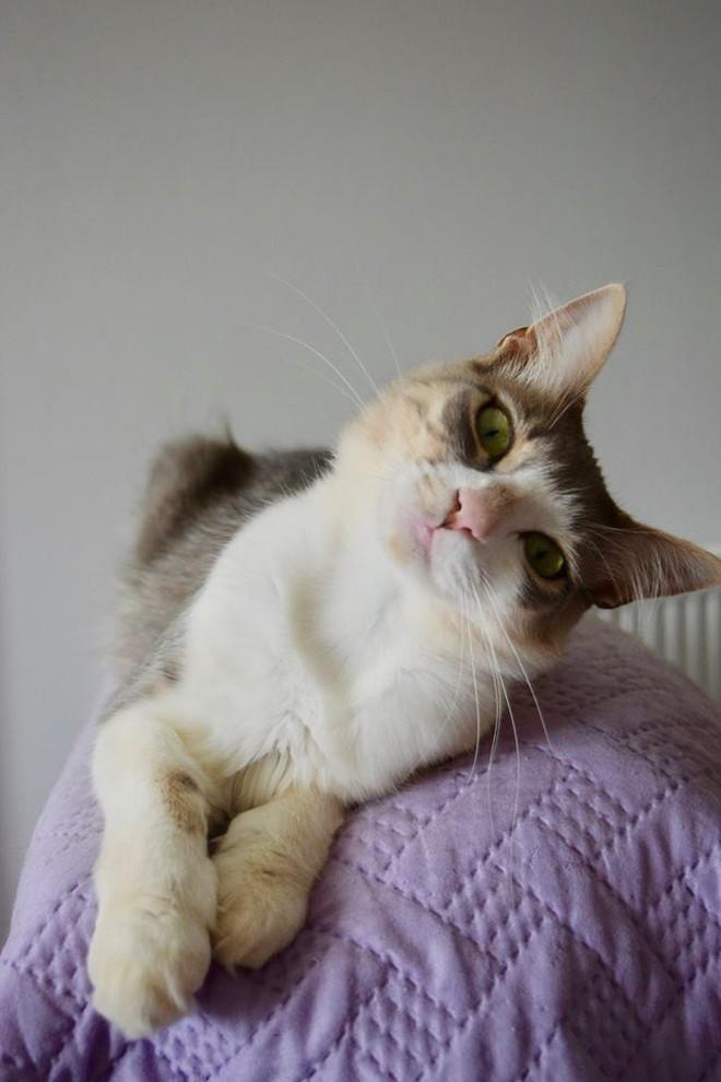 Công việc trong mơ cho hội cuồng mèo: Sống trên đảo thiên đường và chơi với 55 con boss mỗi ngày - ảnh 7