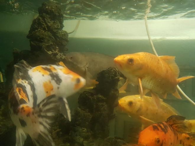Chú cá rô bỗng nổi tiếng MXH vì gương mặt đầy biểu cảm, quyết tâm xa lánh thanh niên chủ định ăn thịt mình - Ảnh 3.