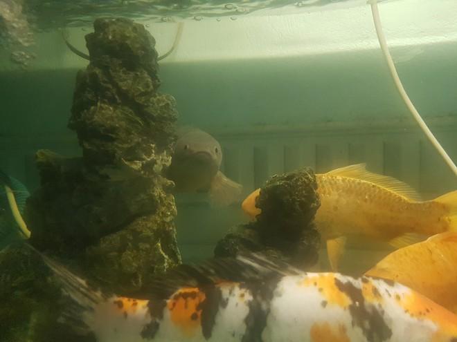 Chú cá rô bỗng nổi tiếng MXH vì gương mặt đầy biểu cảm, quyết tâm xa lánh thanh niên chủ định ăn thịt mình - Ảnh 2.