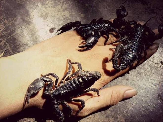 Toát mồ hôi với bộ sưu tập pet cưng kỳ dị từ nhiều chân đến không chân của cậu bạn 2k1 ở Khánh Hòa - Ảnh 1.