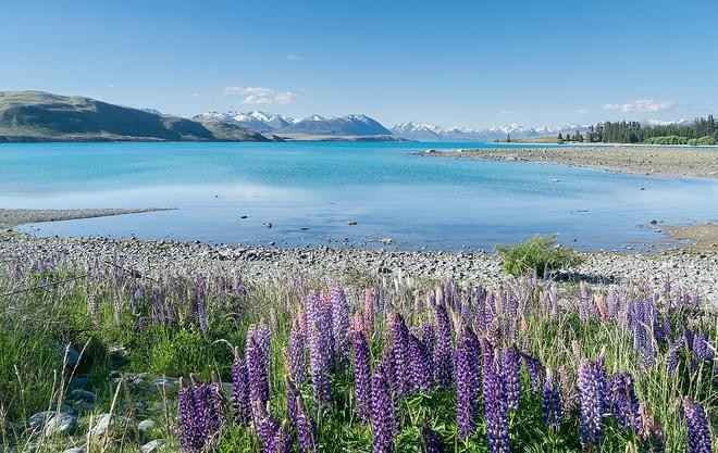 New Zealand - điểm đến du học lãng mạn và đậm chất thơ dành cho những kẻ mơ mộng - ảnh 7