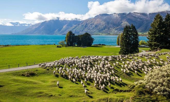 New Zealand - điểm đến du học lãng mạn và đậm chất thơ dành cho những kẻ mơ mộng - ảnh 15