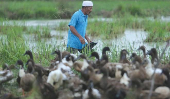 Góc làm giàu không khó: Khởi nghiệp từ 50 con vịt, cặp vợ chồng kiếm gần 70 triệu đồng mỗi tháng nhờ bán trứng vịt - Ảnh 2.