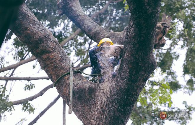 Chùm ảnh: Người Sài Gòn đặt hoa hồng trên gốc những hàng cây xanh bị đốn hạ ở đuờng Tôn Đức Thắng - ảnh 4