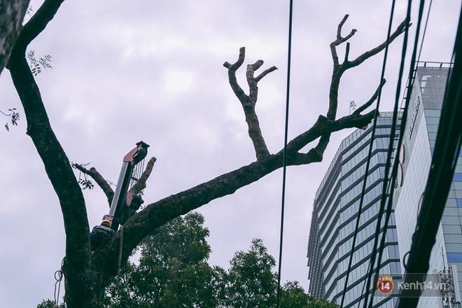 Chùm ảnh: Người Sài Gòn đặt hoa hồng trên gốc những hàng cây xanh bị đốn hạ ở đuờng Tôn Đức Thắng - ảnh 17