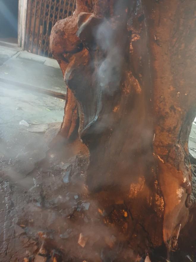 Clip: Dừng xe để cứu cây cổ thụ đang bị đốt gốc ở Hà Nội, 2 cô gái bị nói lo bò trắng răng - Ảnh 3.