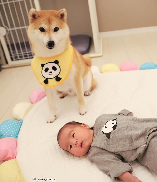 Vừa dễ thương lại biết dỗ trẻ, chó shiba thu hút gần 400.000 người theo dõi trên Instagram - Ảnh 10.