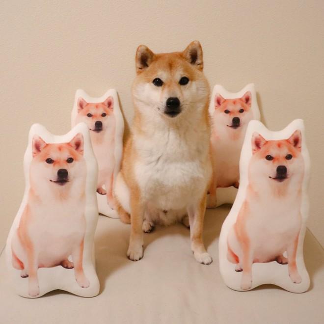 Vừa dễ thương lại biết dỗ trẻ, chó shiba thu hút gần 400.000 người theo dõi trên Instagram - Ảnh 6.