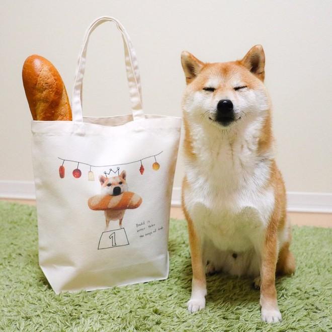 Vừa dễ thương lại biết dỗ trẻ, chó shiba thu hút gần 400.000 người theo dõi trên Instagram - Ảnh 7.