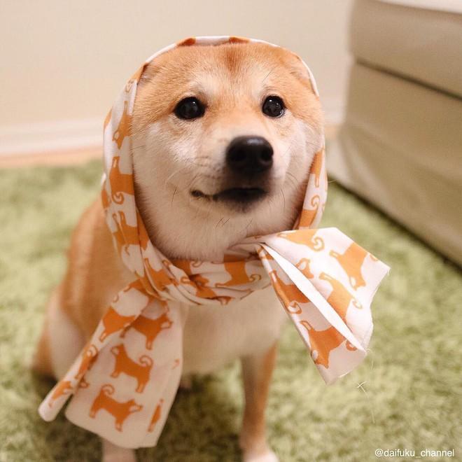 Vừa dễ thương lại biết dỗ trẻ, chó shiba thu hút gần 400.000 người theo dõi trên Instagram - Ảnh 8.