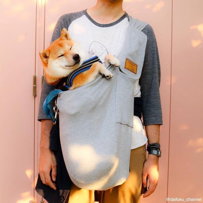 Vừa dễ thương lại biết dỗ trẻ, chó shiba thu hút gần 400.000 người theo dõi trên Instagram - Ảnh 9.