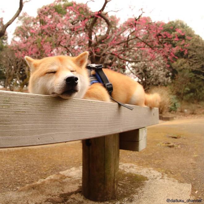 Vừa dễ thương lại biết dỗ trẻ, chó shiba thu hút gần 400.000 người theo dõi trên Instagram - Ảnh 12.