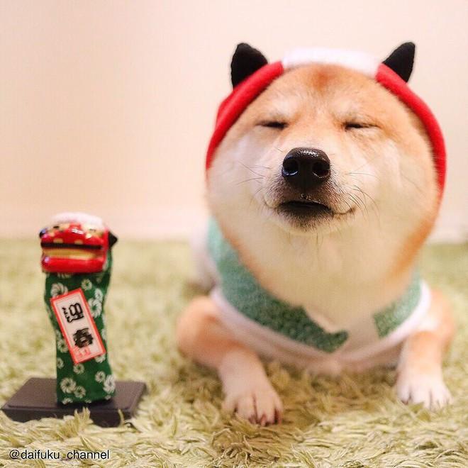 Vừa dễ thương lại biết dỗ trẻ, chó shiba thu hút gần 400.000 người theo dõi trên Instagram - Ảnh 13.