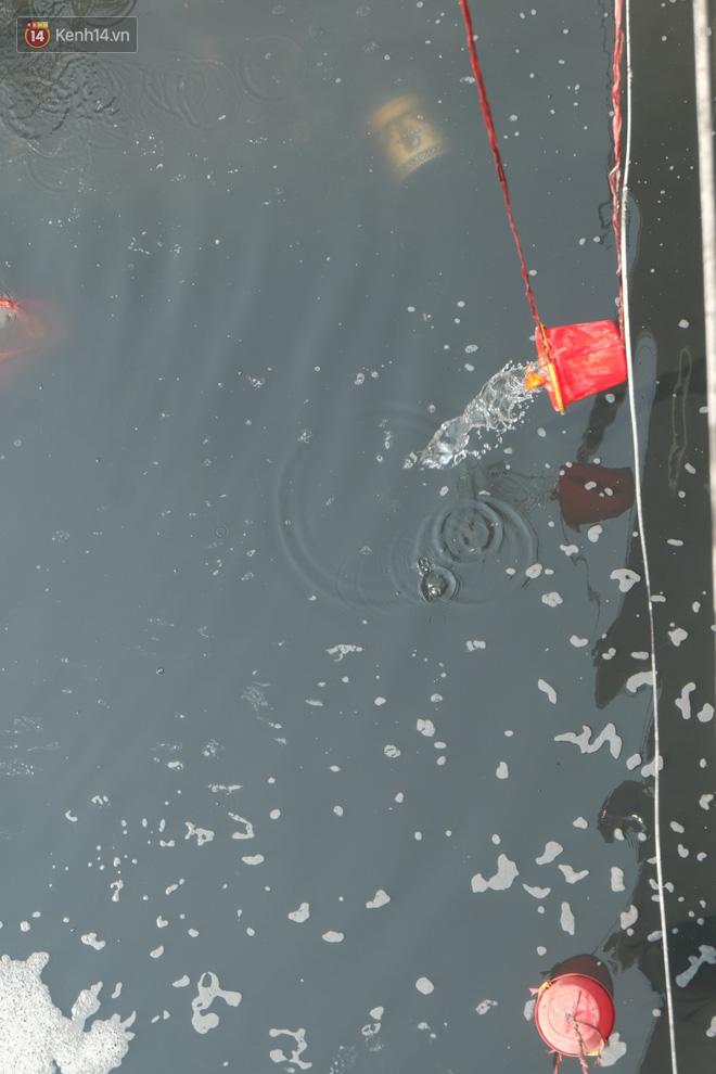 Hà Nội: Cá chép tiễn ông Công ông Táo được TNV hỗ trợ bỏ vào chậu thả xuống lòng sông, nhưng dòng nước đen kịt khiến ai cũng phải nhíu mày - ảnh 5