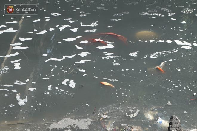 Hà Nội: Cá chép tiễn ông Công ông Táo được TNV hỗ trợ bỏ vào chậu thả xuống lòng sông, nhưng dòng nước đen kịt khiến ai cũng phải nhíu mày - ảnh 16