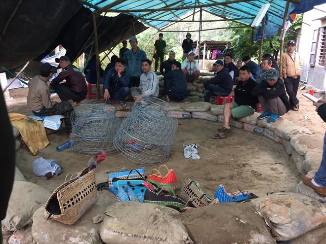 Triệt xóa trường đá gà quy mô lớn tại vùng giáp ranh Đà Nẵng - Quảng Nam - Ảnh 1.