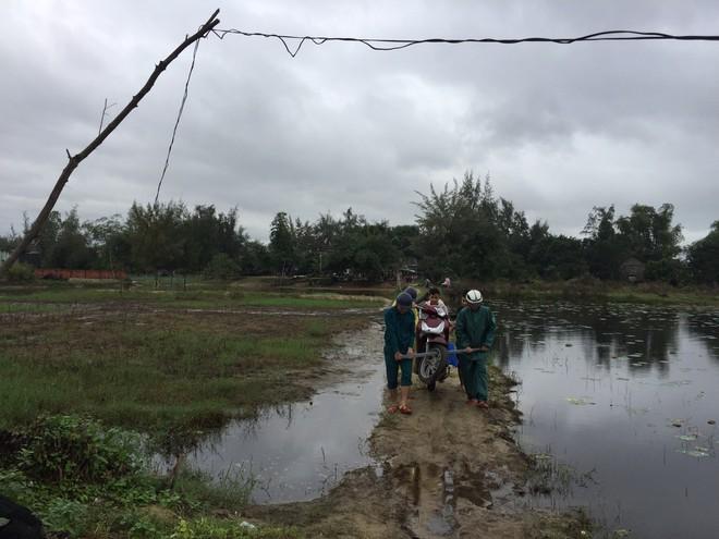 Triệt xóa trường đá gà quy mô lớn tại vùng giáp ranh Đà Nẵng - Quảng Nam - Ảnh 3.
