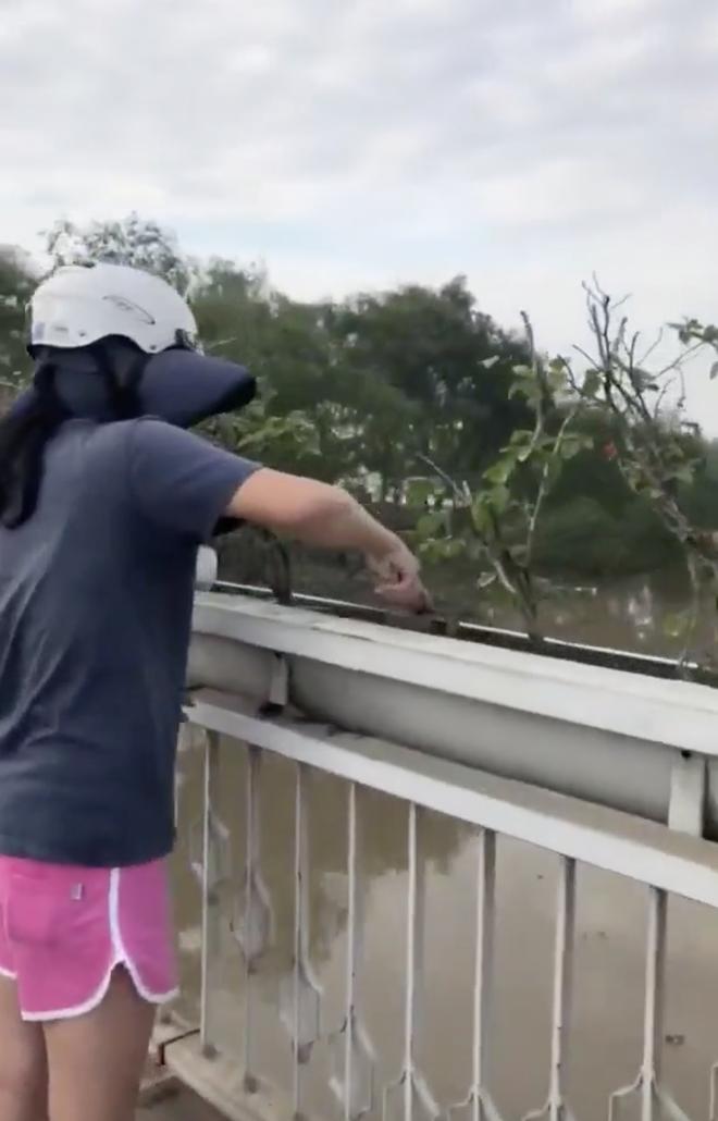 Người phụ nữ ngang nhiên bứng trộm cây cảnh ở Phú Mỹ Hưng, bị nhắc nhở còn cố chấp: Em chỉ xin 1, 2 cây thôi mà - ảnh 1