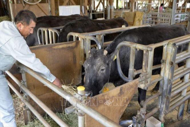 Con bò nhân bản vô tính đầu tiên trên thế giới đã qua đời - ảnh 1