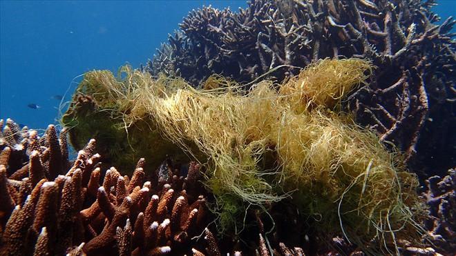 Đáy biển đầy rác thải và cảnh tượng đắng lòng qua ống kính của thợ lặn - ảnh 5