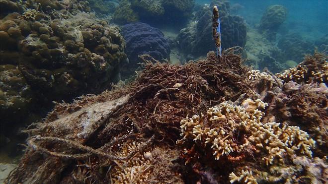 Đáy biển đầy rác thải và cảnh tượng đắng lòng qua ống kính của thợ lặn - ảnh 7